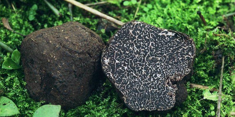 Black Norcia Truffle