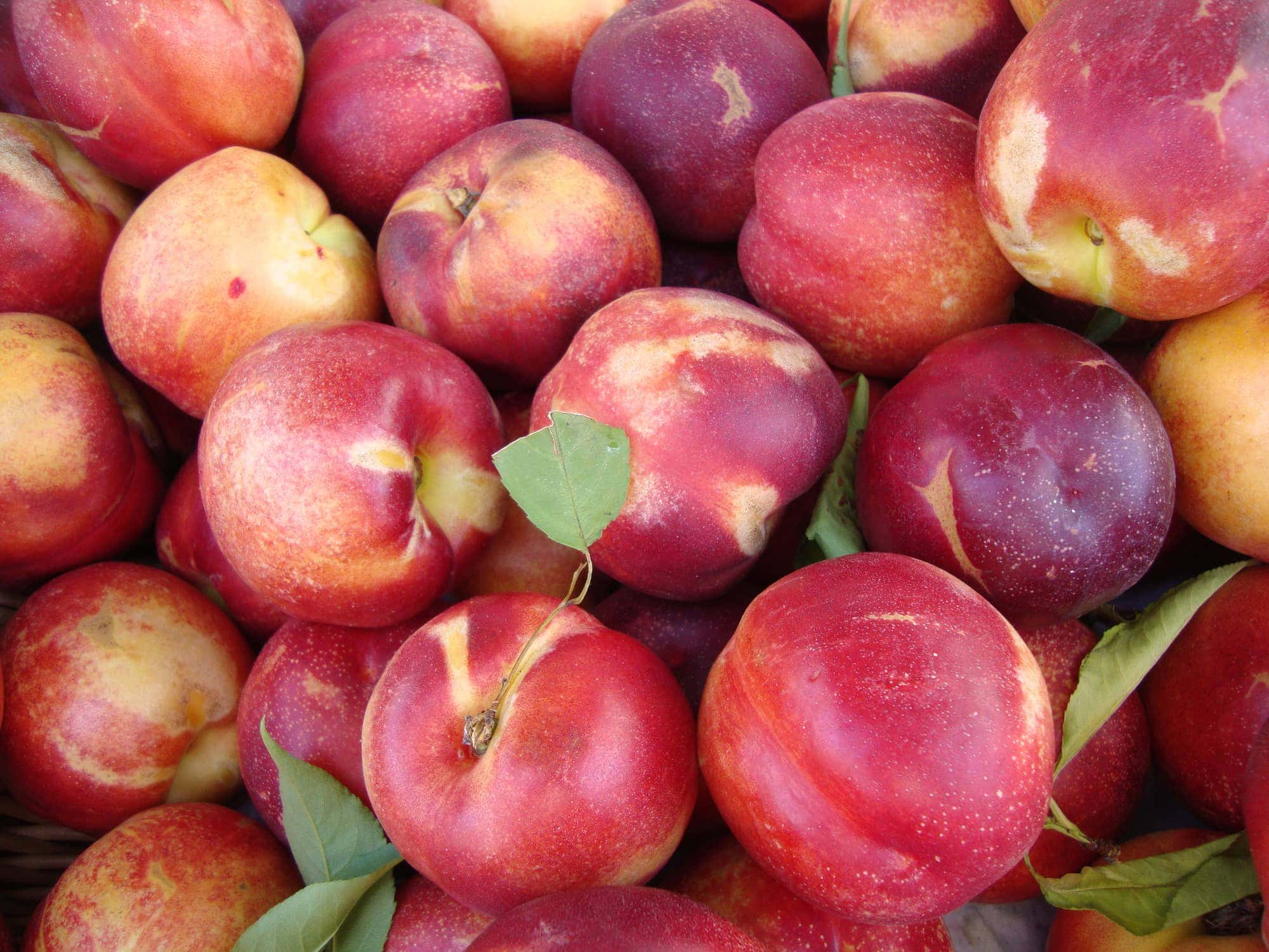 Rose Diamond Nectarines