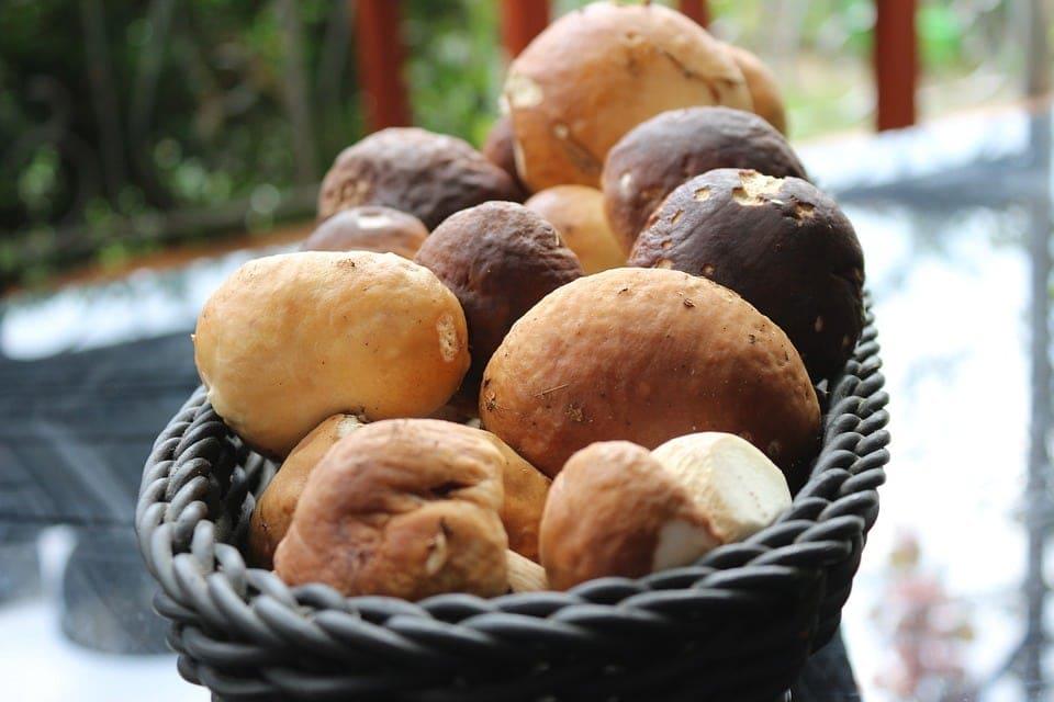 Porcini mushrooms in a basket