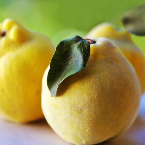 close-up of quince fruits what is quince
