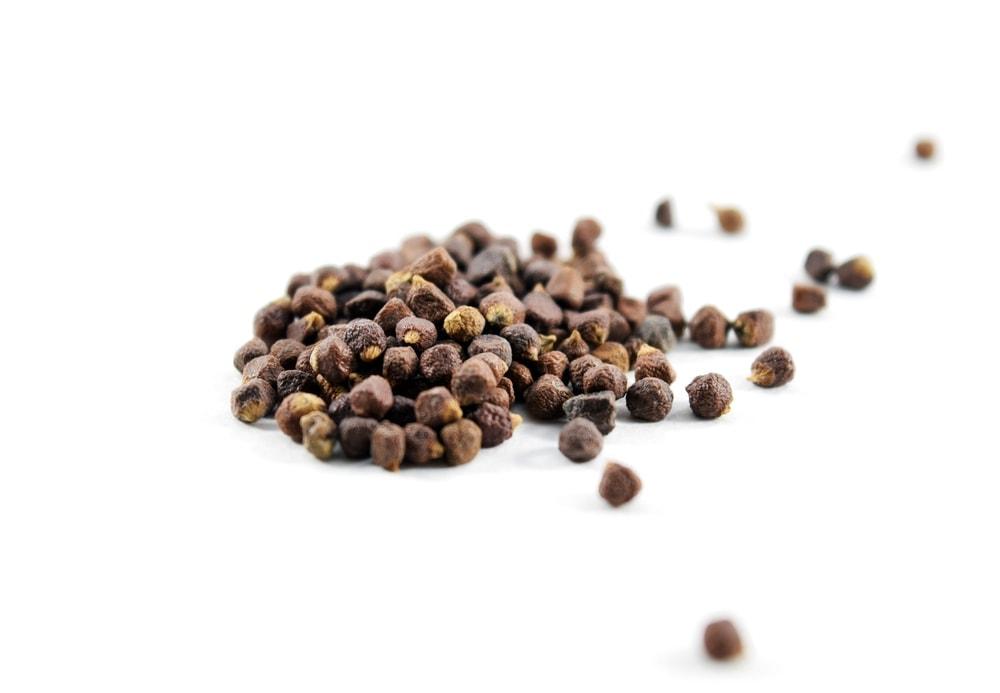 Organic grains of paradise (Aframomum melegueta)